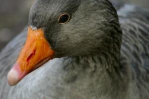 2009-10-03---Reading-Ducks