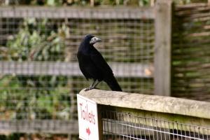 2009-10-04---Marwell-Zoo