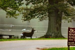 2009-10-10---Deer-Rut-Walk-in-Lyme-Park