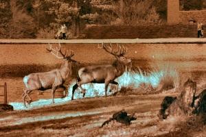 2009-11-07---Red-Deer--Lyme-Park
