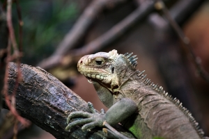2010-07-11_-_Chester_Zoo_12