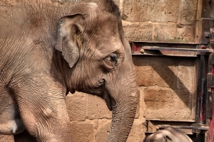 2010-08-16_-_Chester_Zoo_13