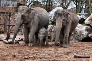 2011-01-02_-_Chester_Zoo_14