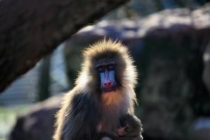 2011-01-29_-_South_Lakes_Wild_Animal_Park_2
