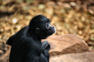 2011-03-06_-_Chester_Zoo_15