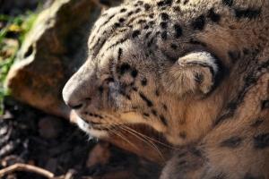 2012-01-02_-_Twycross_Zoo_2